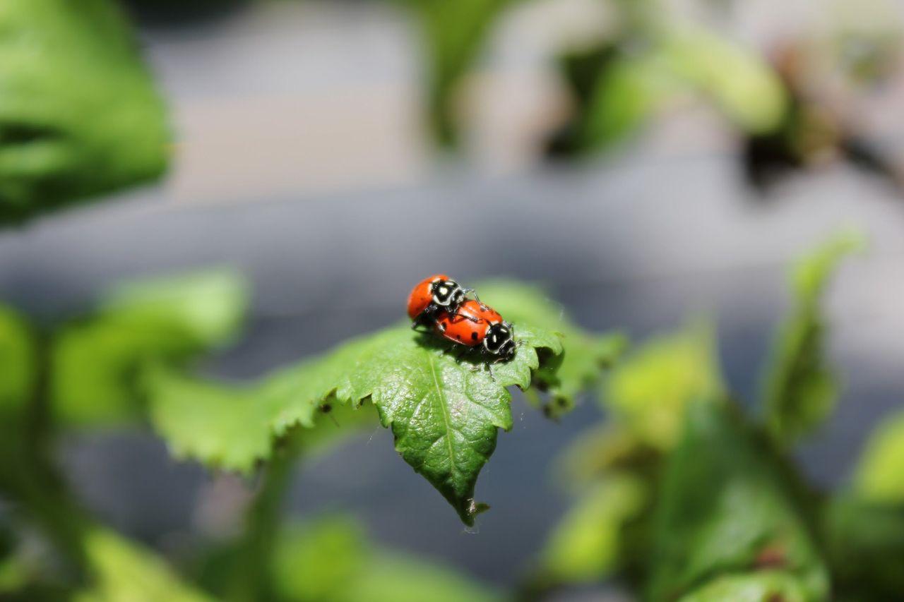 Antalet insekter har minskat med 24 procent sedan 1990