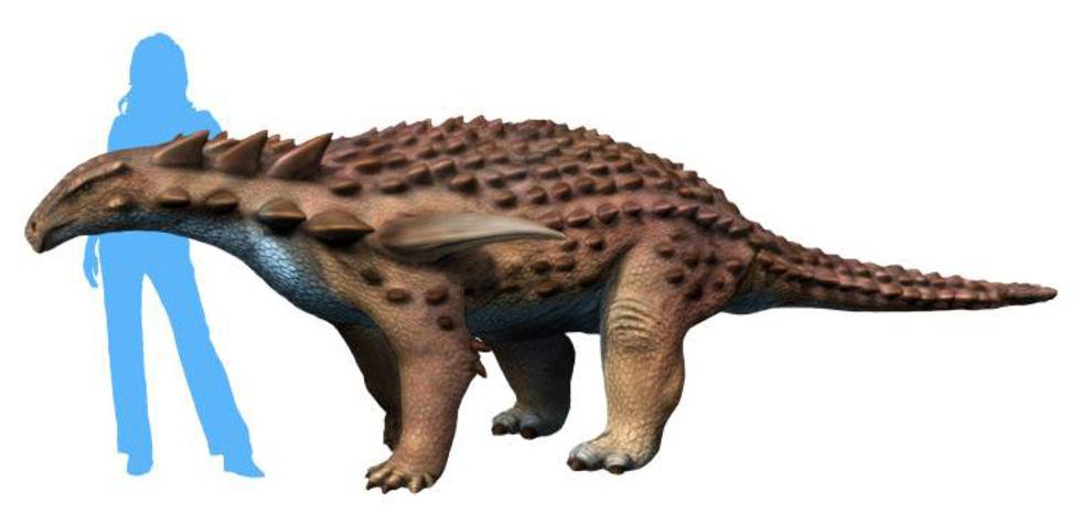 Kolla in när utgrävningen av en dinosaurie ballar ur