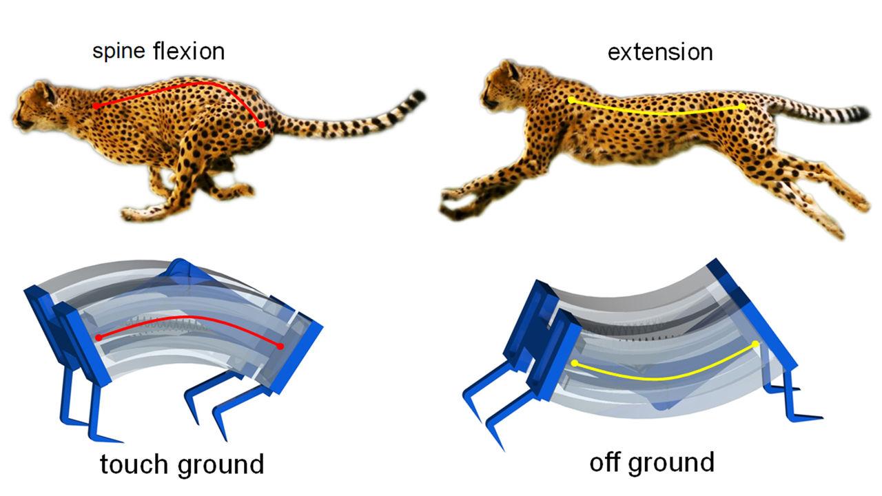 Forskare tar fram mjuk robot modellerad efter en gepard