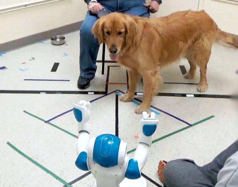Hundar lyder kommandon som kommer från robotar