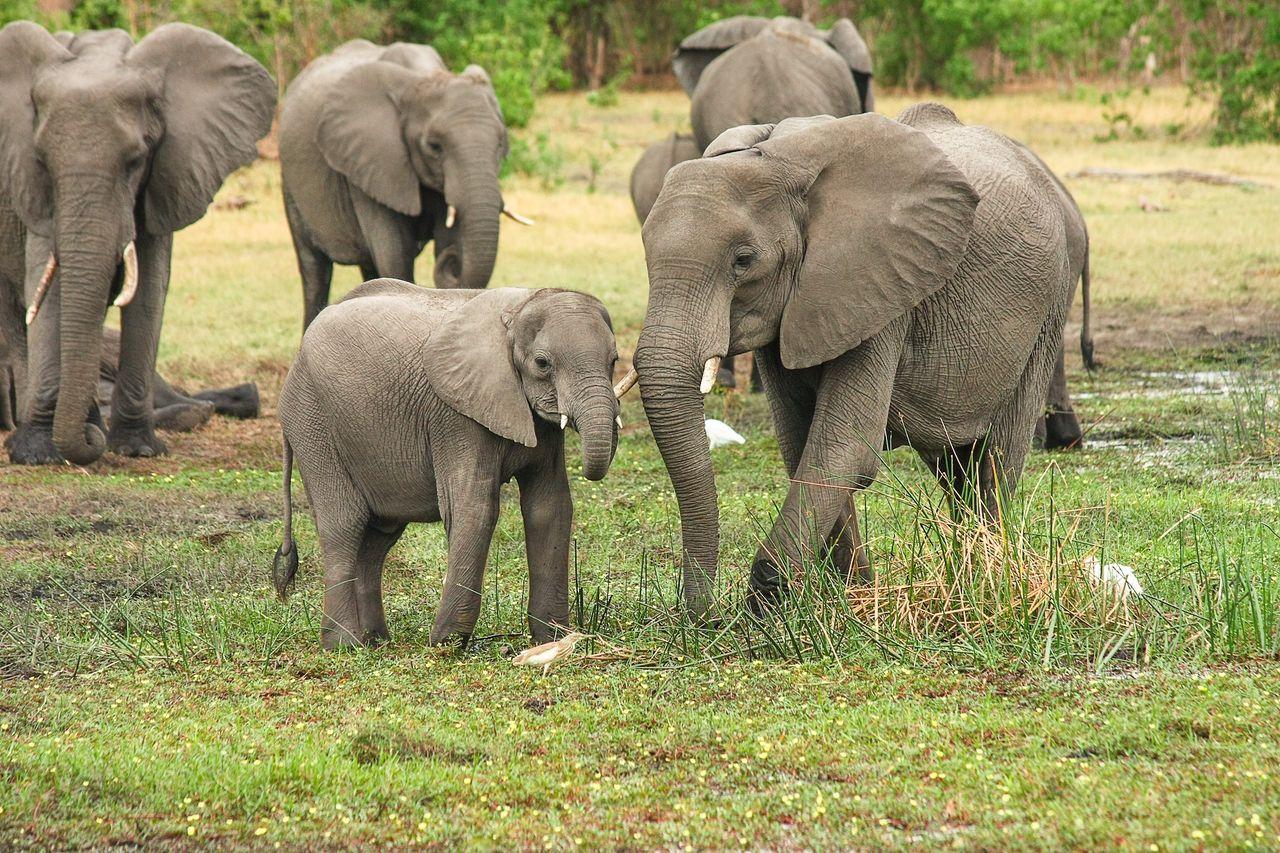 Slut med elefanter på cirkus i Danmark