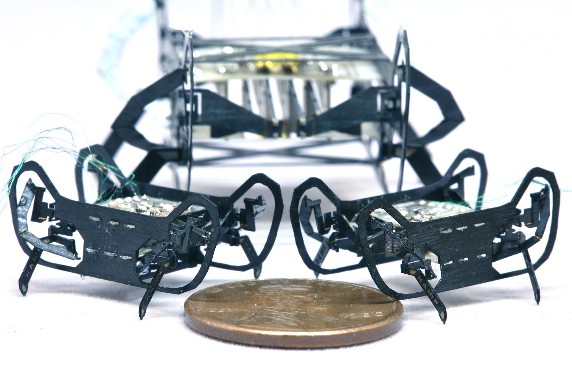 Roboten HAMR-Jr har hämtat inspiration från kackerlackor