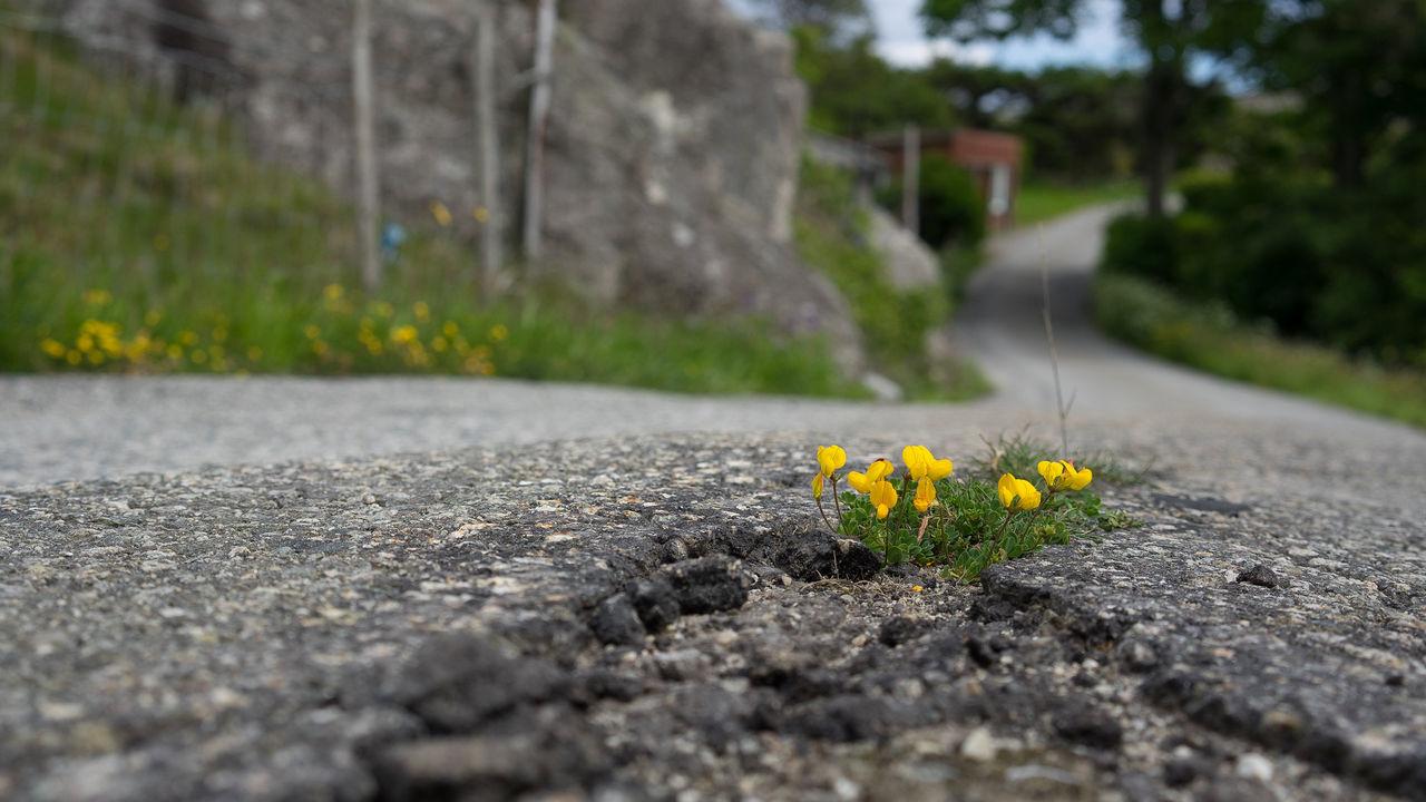 Mjukare typ av asfalt ska testas i Lund