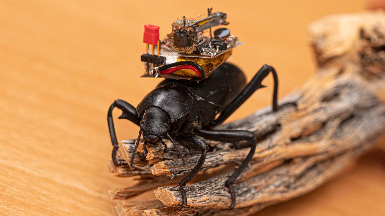 Forskare tar fram kameraryggsäck till skalbaggar