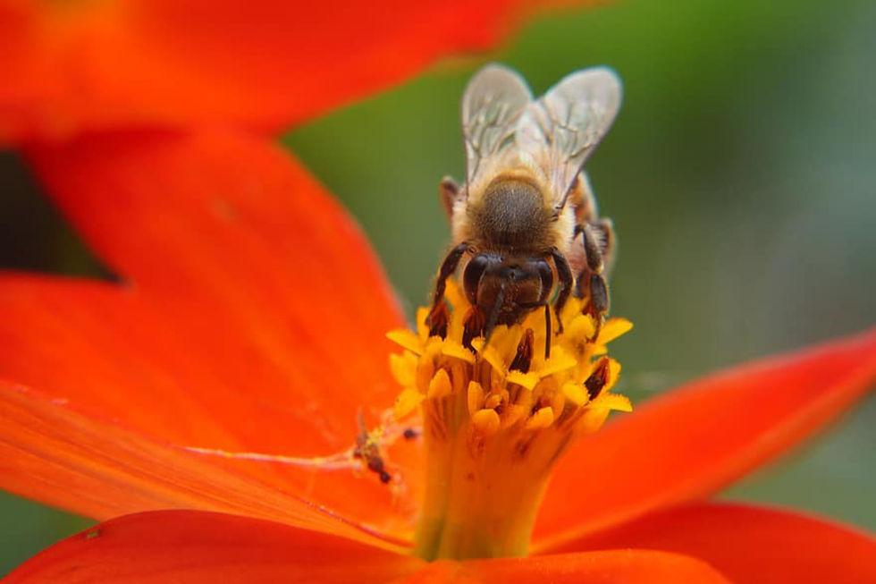 Få bin kan hota mattillgången