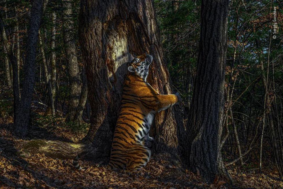 Här är årets bästa naturfoton