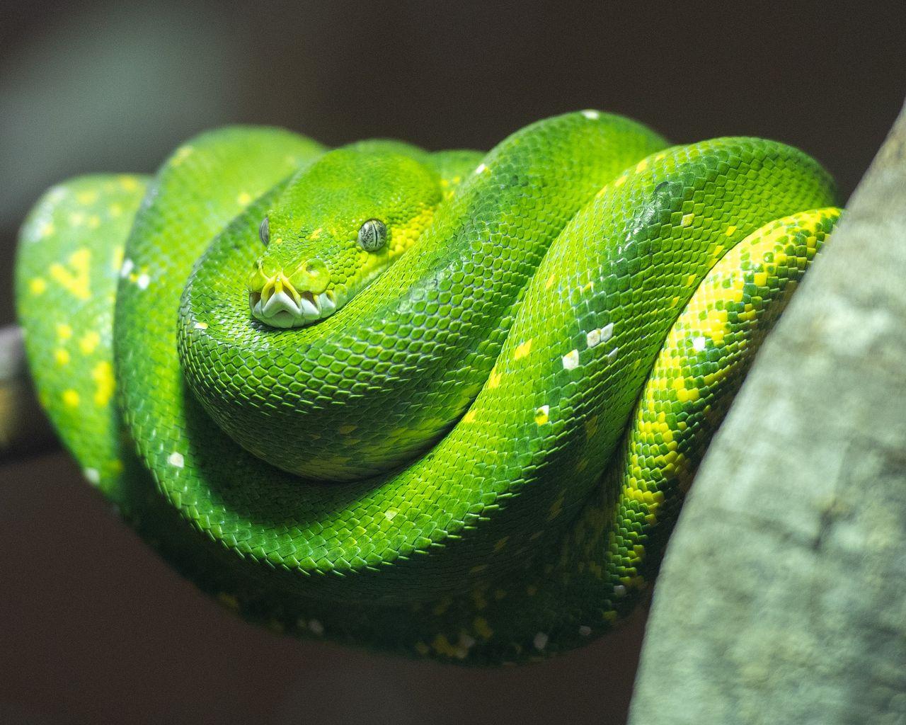 Python var det programmeringsspråk som ökade mest 2020