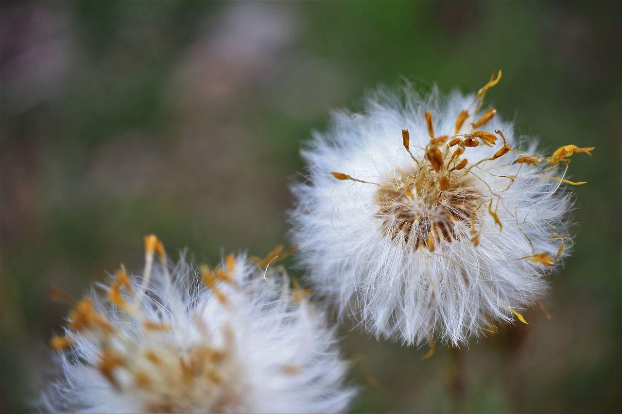 Pollensäsonger har blivit längre
