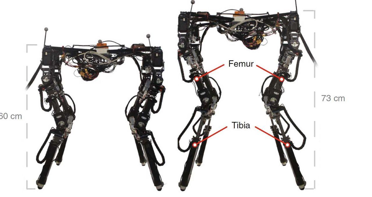 Fyrbent robot kan anpassa sin gång till olika underlag