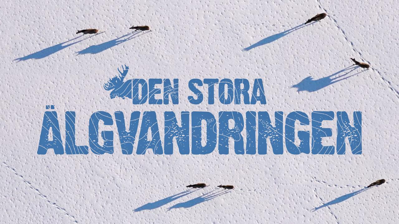 SVT kör Den stora älgvandringen även i år