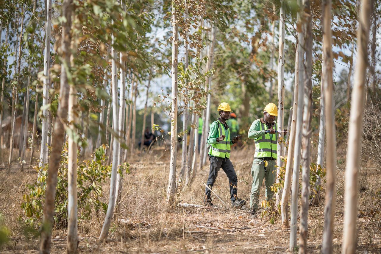 Apple satsar på trädplantering