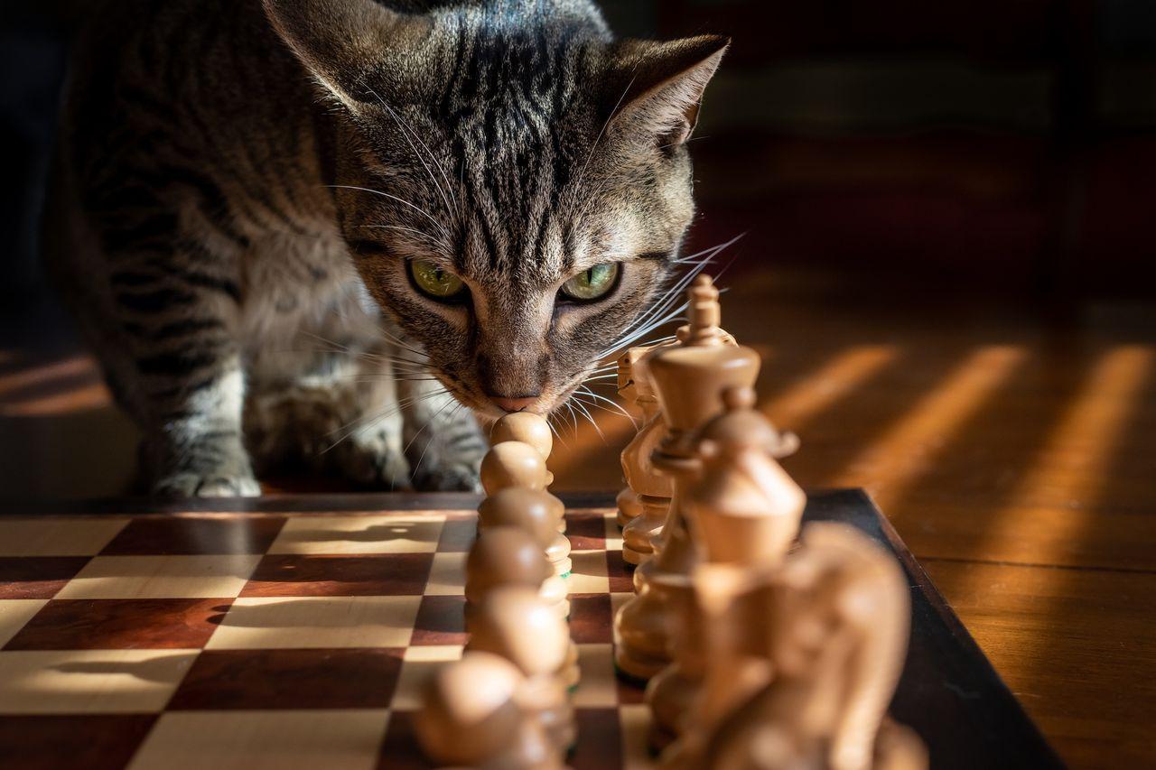 Garry Kasparov lanserar shackplattform