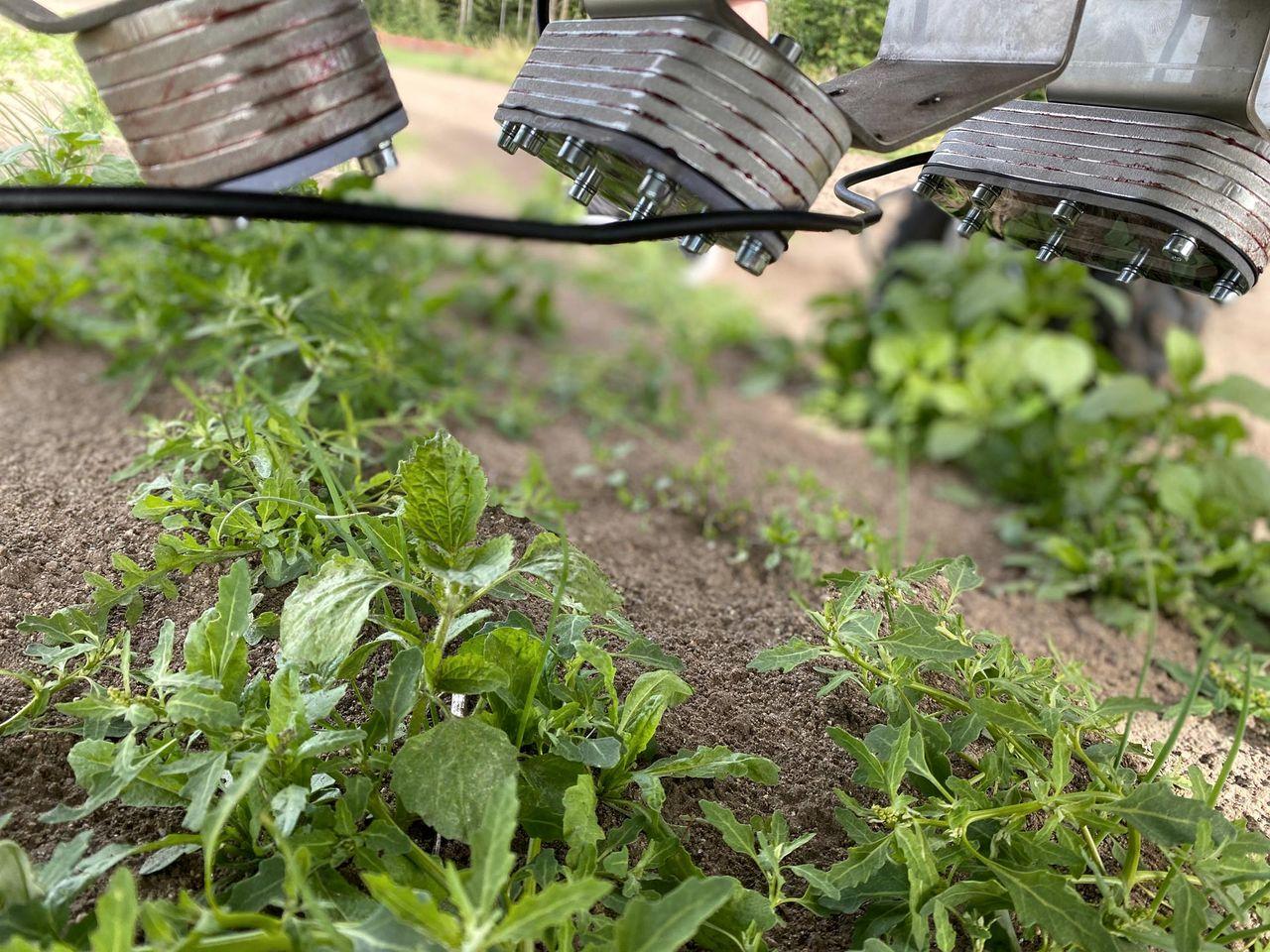 Svenska Ekobot rensar ogräs på egen hand