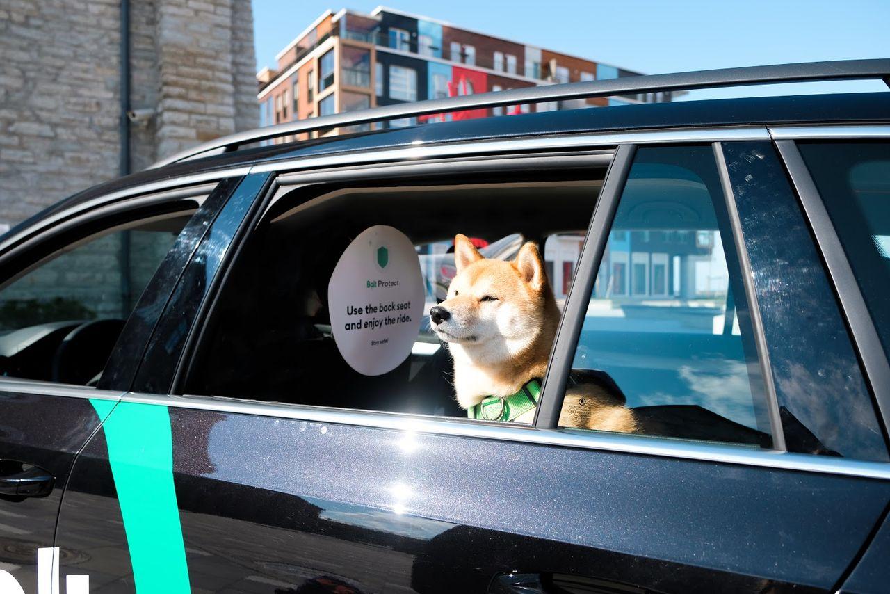 Även Bolt välkomnar husdjur i sina bilar