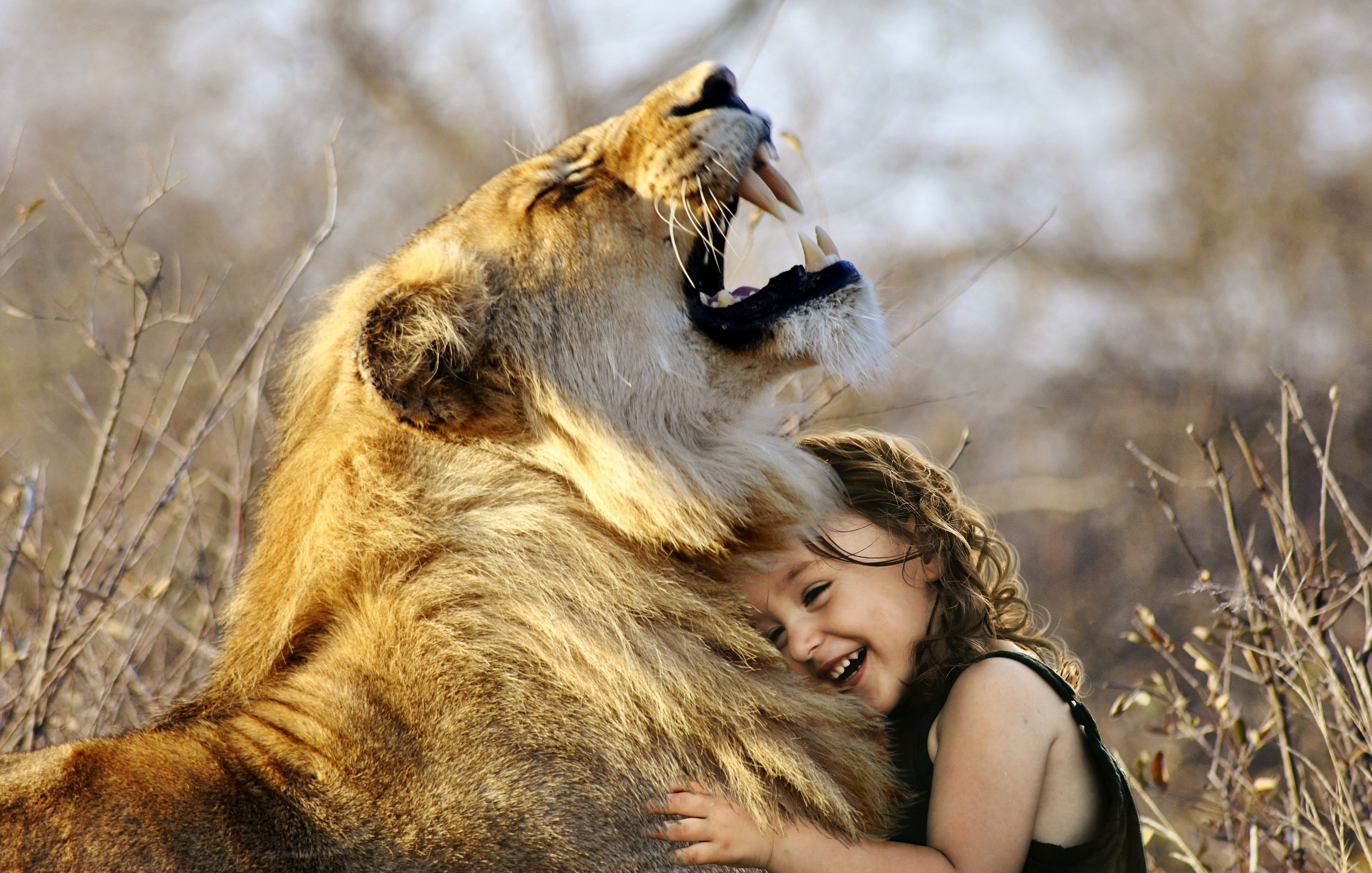 Sydafrika på väg att stoppa jakt på lejon i fångenskap Hurra!