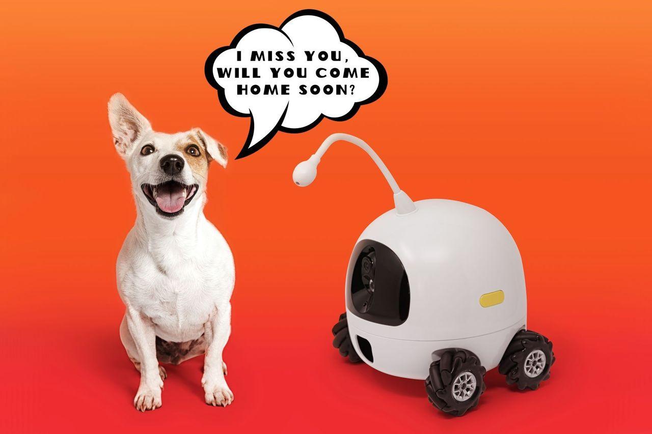 Rocki är en sällskapsrobot för husdjur