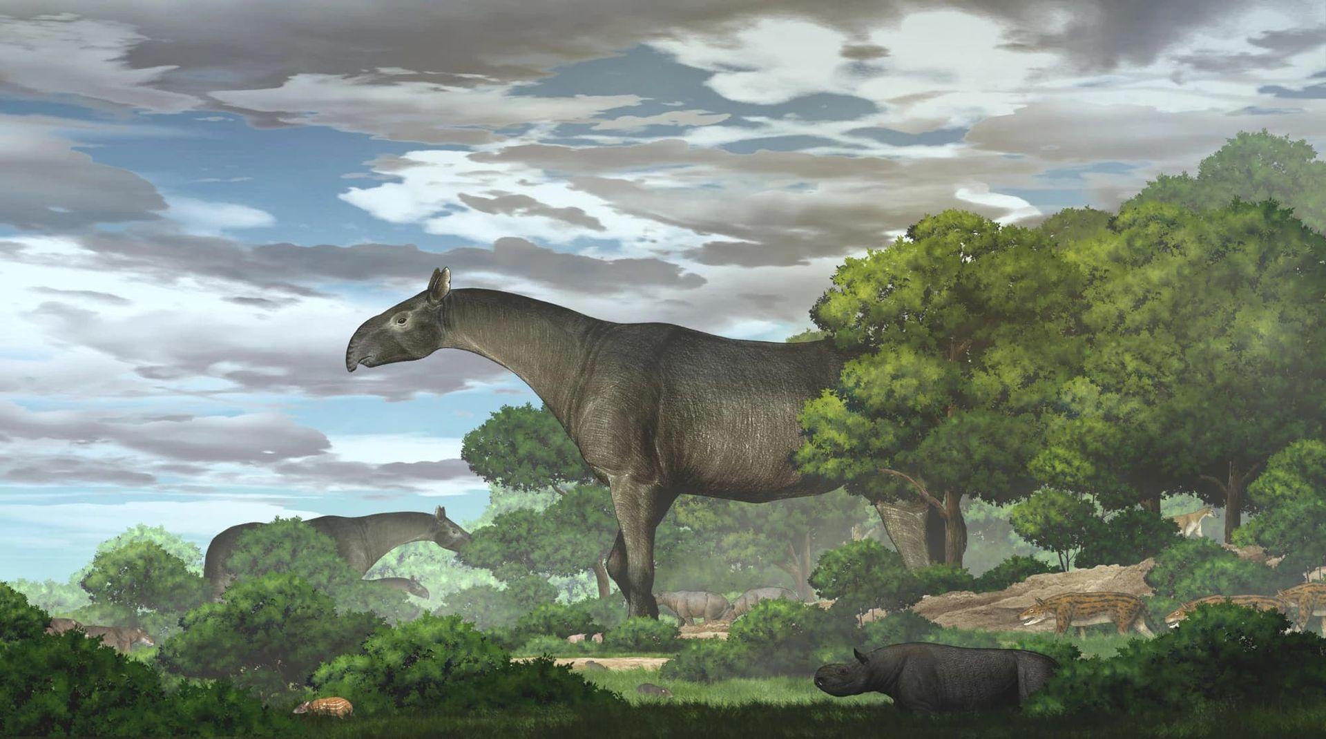 Fossil från jättenoshörning hittad i Kina