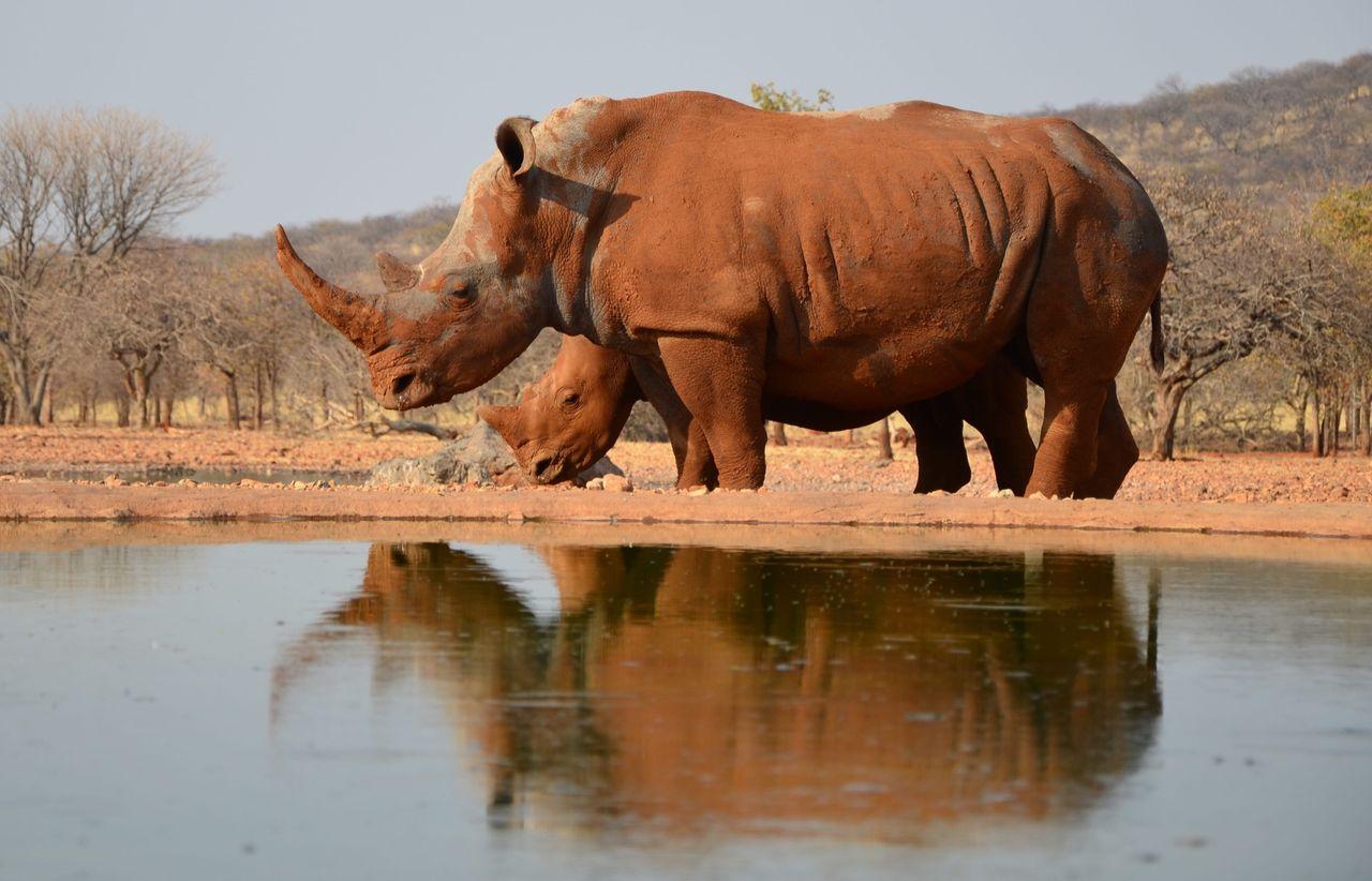 Kraftigt minskad tjuvjakt i Namibia
