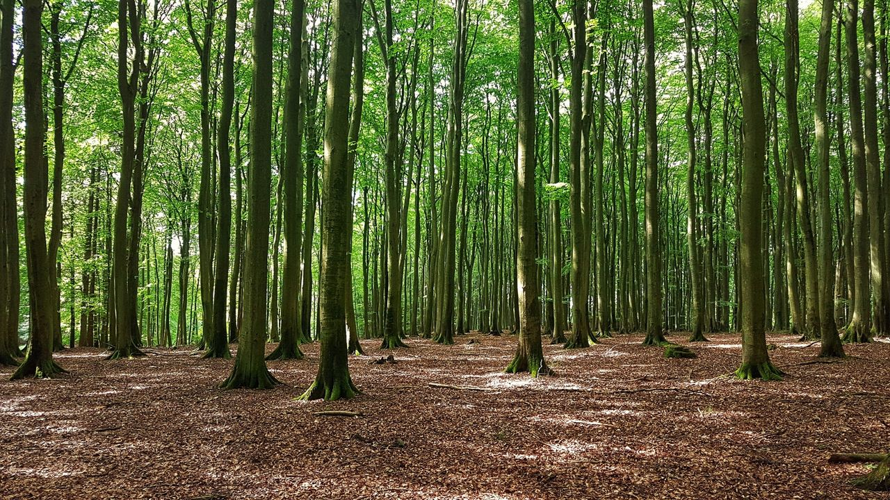 Pakistan ska plantera 10 miljarder träd