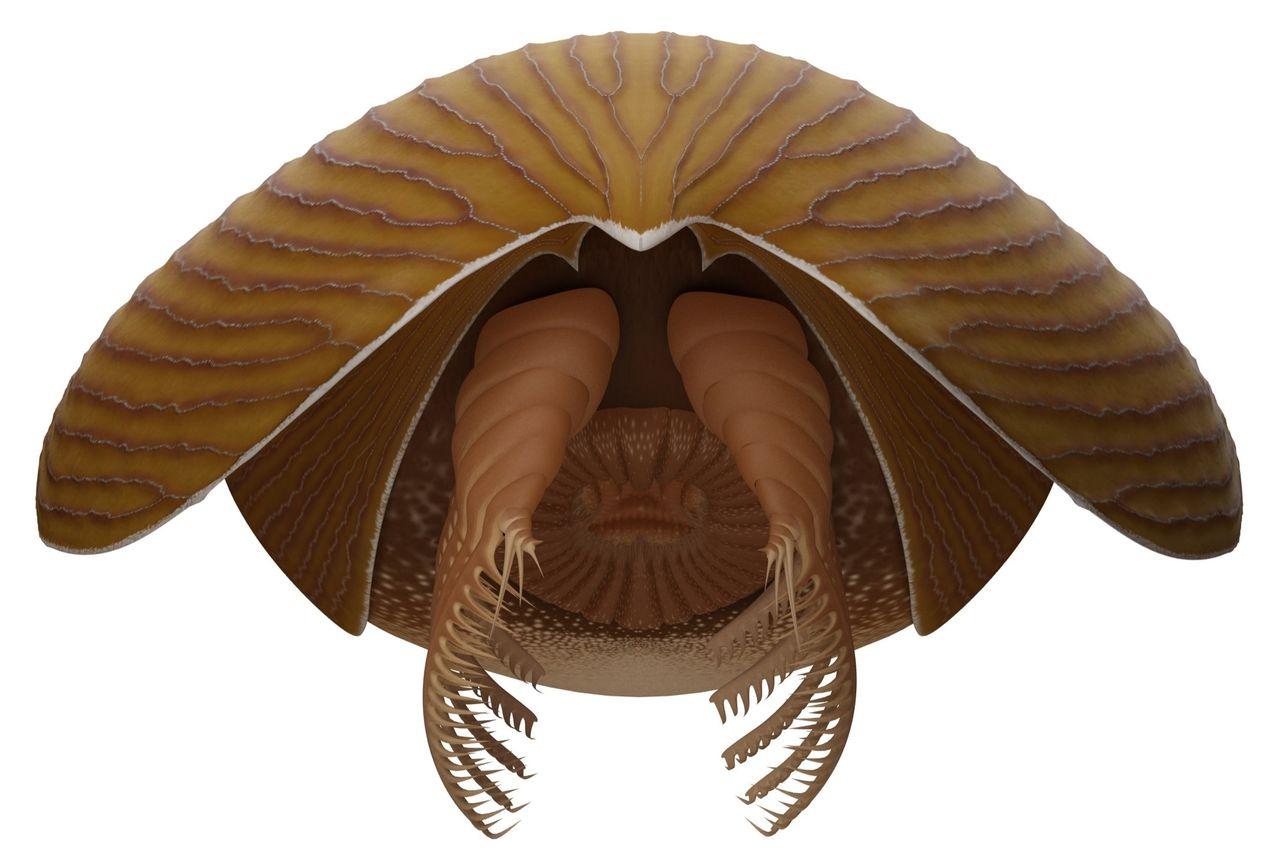 Fossil från tidigare okänd djurart hittad i Kanada
