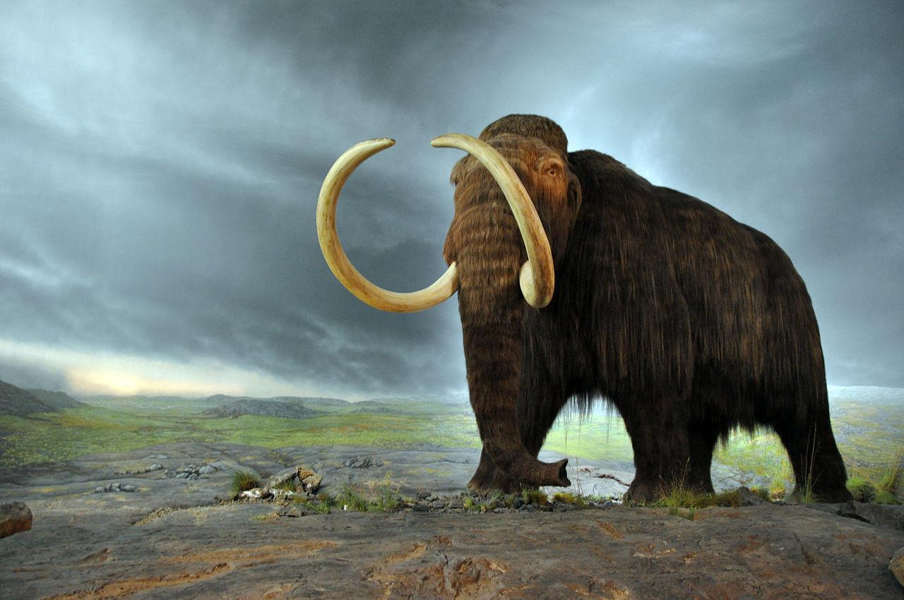 Forskare planerar att återskapa mammutar