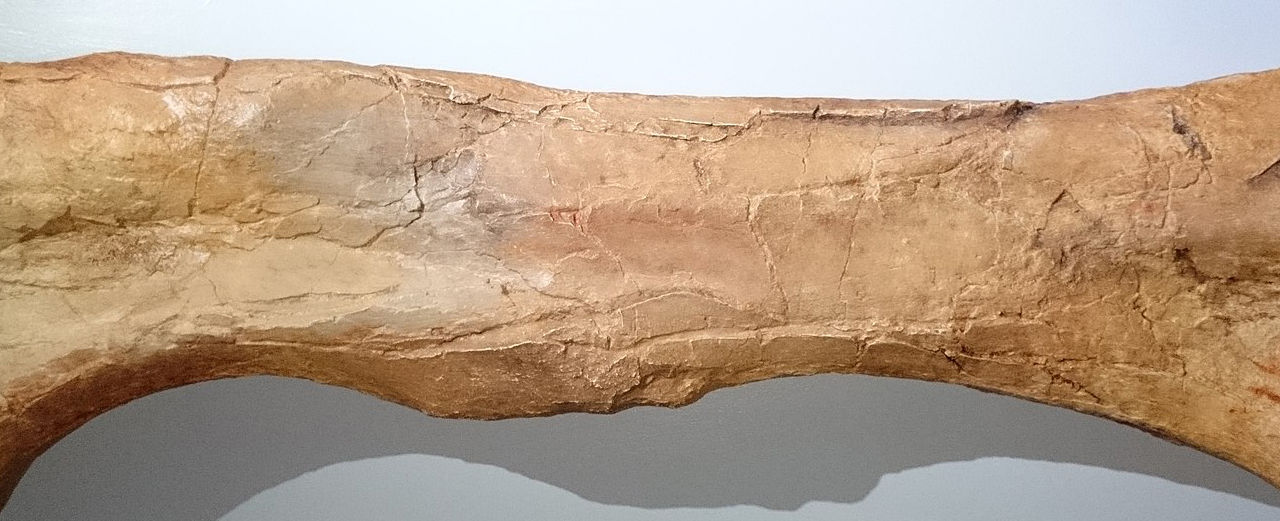 80 miljoner år gammalt dinosaurieben hittat i Skåne