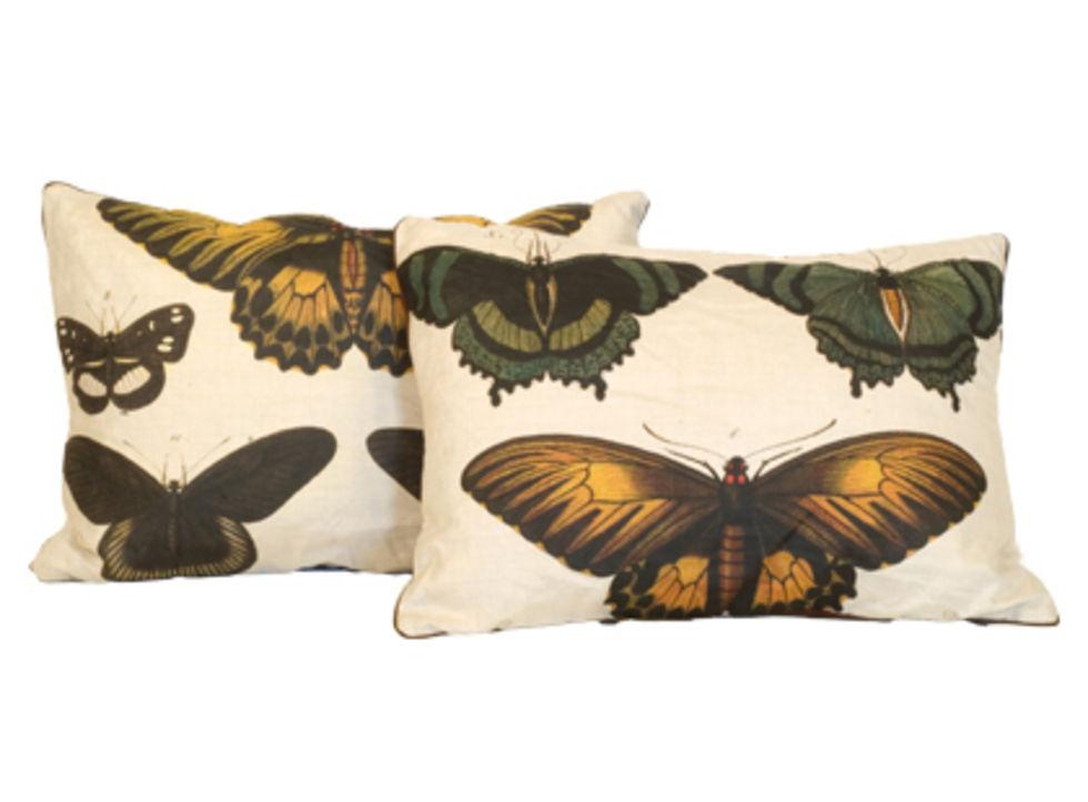 Fjärilskuddar